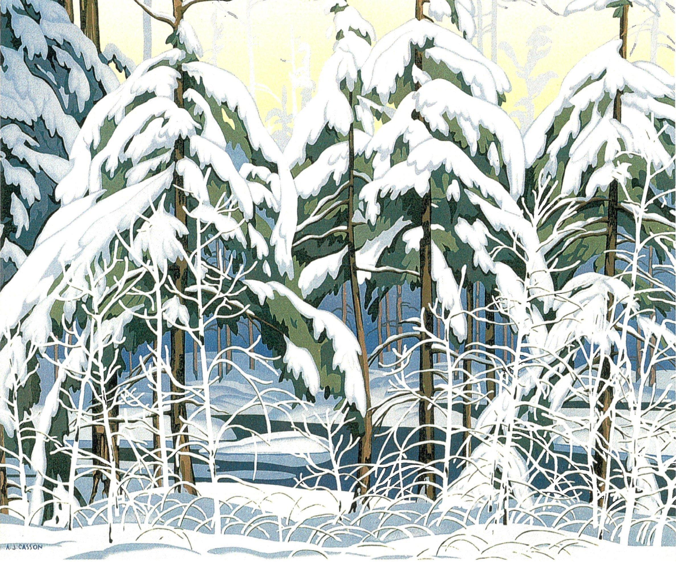 Snow Spruce