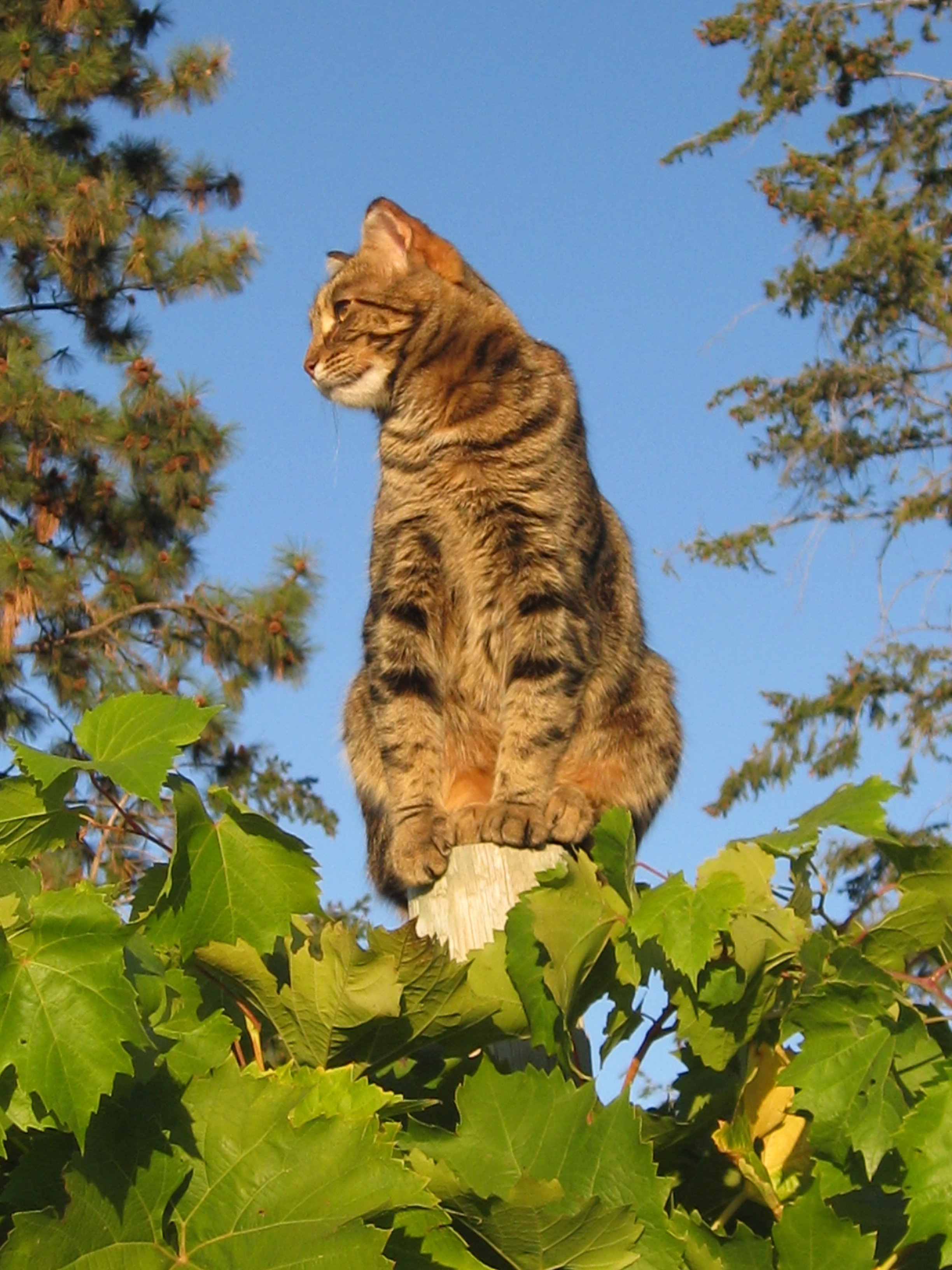 https://0901.nccdn.net/4_2/000/000/002/376/September-the-St-Hubertus---Oak-Bay-Vineyard-Cat.JPG