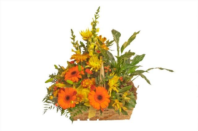 https://0901.nccdn.net/4_2/000/000/002/533/azaleacomboplanterflowerbasket.jpg