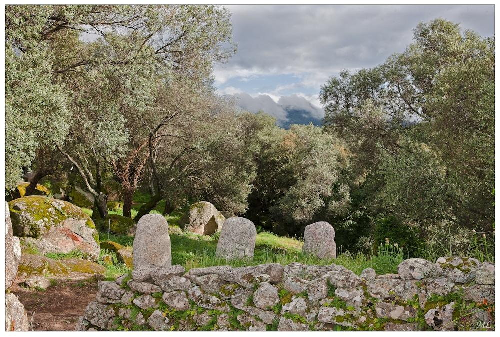 Filitosa en Corse et  ses statues-menhirs  dans un paysage  d'oliviers  multiséculaires - Avri  2010
