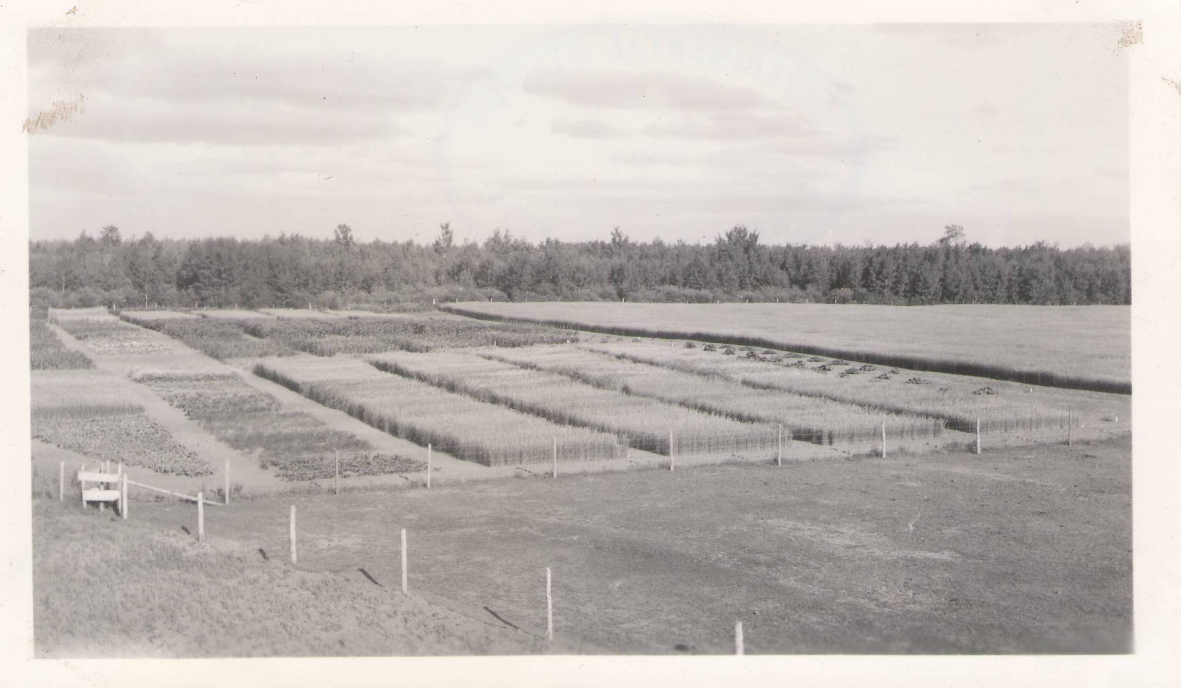 Plots at the Fort Vermilion Experimental Farm. 1993.04.31.06 / Agriculture Canada