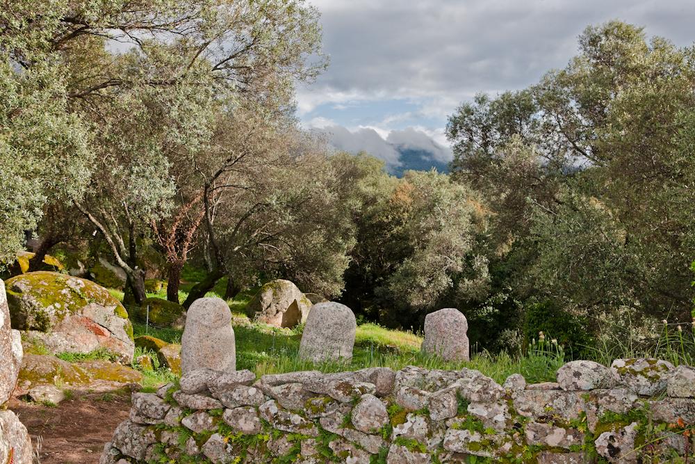 Filitosa et ses  statues-menhirs dans  un paysage d'oliviers  multiséculaires - Avril 2010