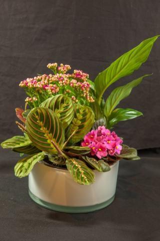 https://0901.nccdn.net/4_2/000/000/009/536/lcp-planter-basket-may12-2020-4746.jpg