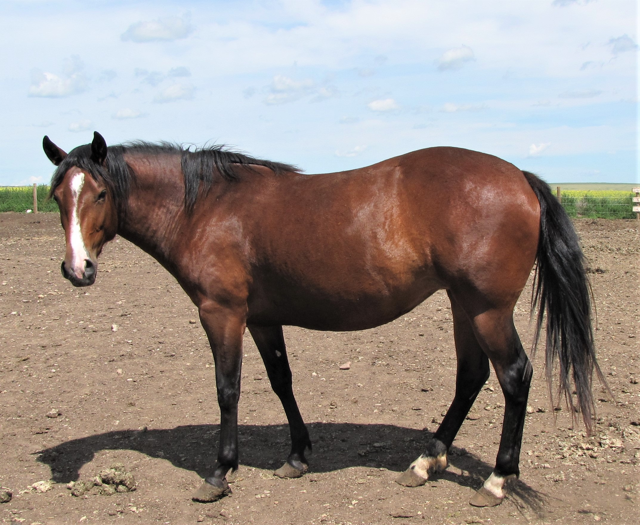 CLEO - 2016 Appaloosa Mare. She loves people and is very quiet.