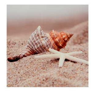 Stars & Shells