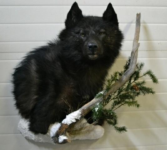 https://0901.nccdn.net/4_2/000/000/00d/f43/Animals-Clar-Pic-2017-1--2--534x480.jpg