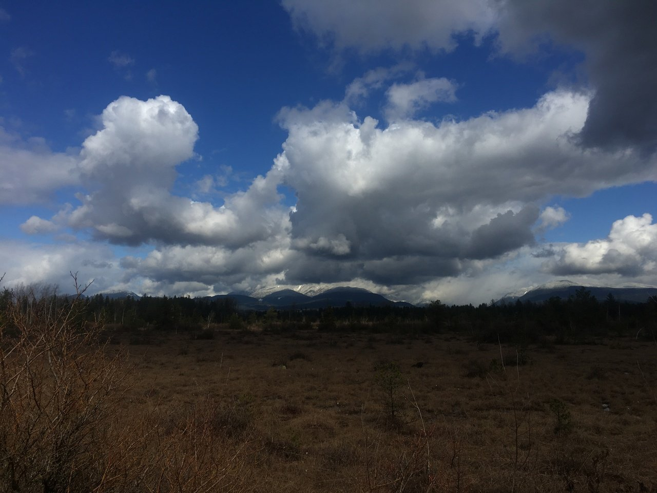 A view of GOlden Ears mountain from the Langley Bog by Sara Alaica