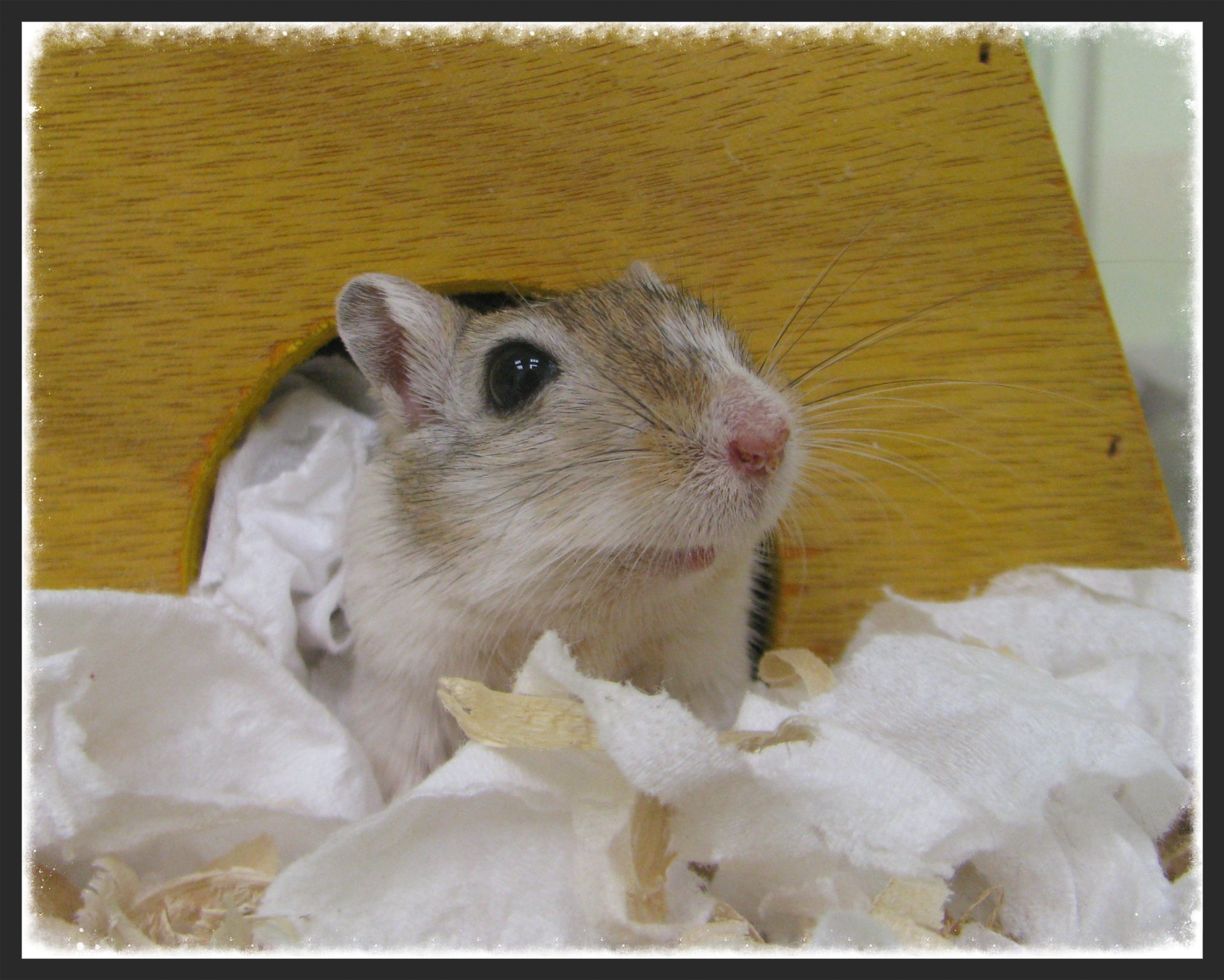 Gerbil used as sex object