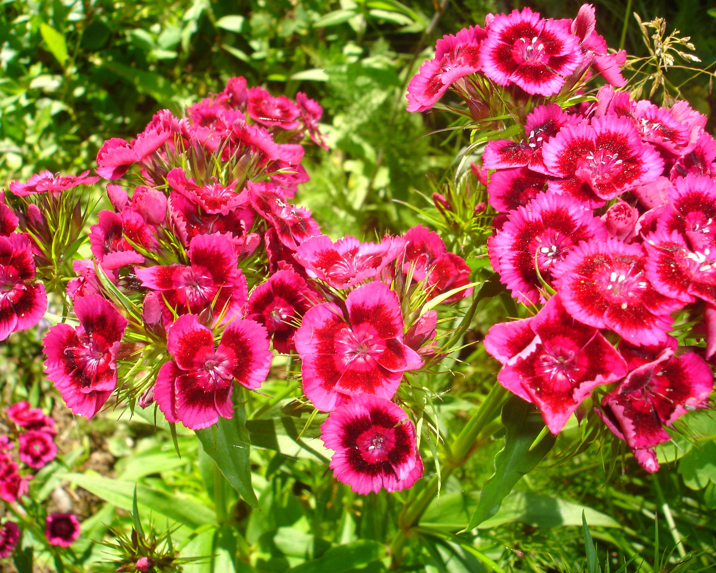 https://0901.nccdn.net/4_2/000/000/011/751/flowers03.jpg