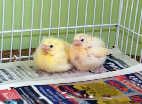 BONNIE'S BIRDS