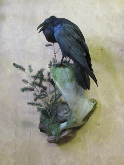 https://0901.nccdn.net/4_2/000/000/017/e75/Bird-Blueish-web-2011-08--2--480x640.jpg