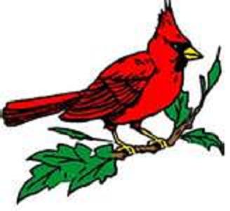 Cardinal Laser