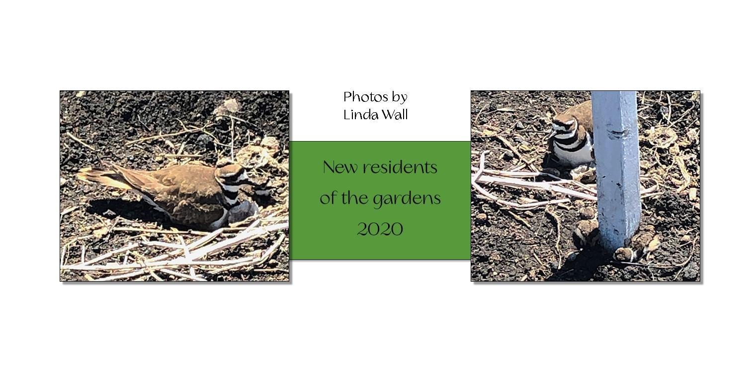 https://0901.nccdn.net/4_2/000/000/017/e75/garden5.jpg