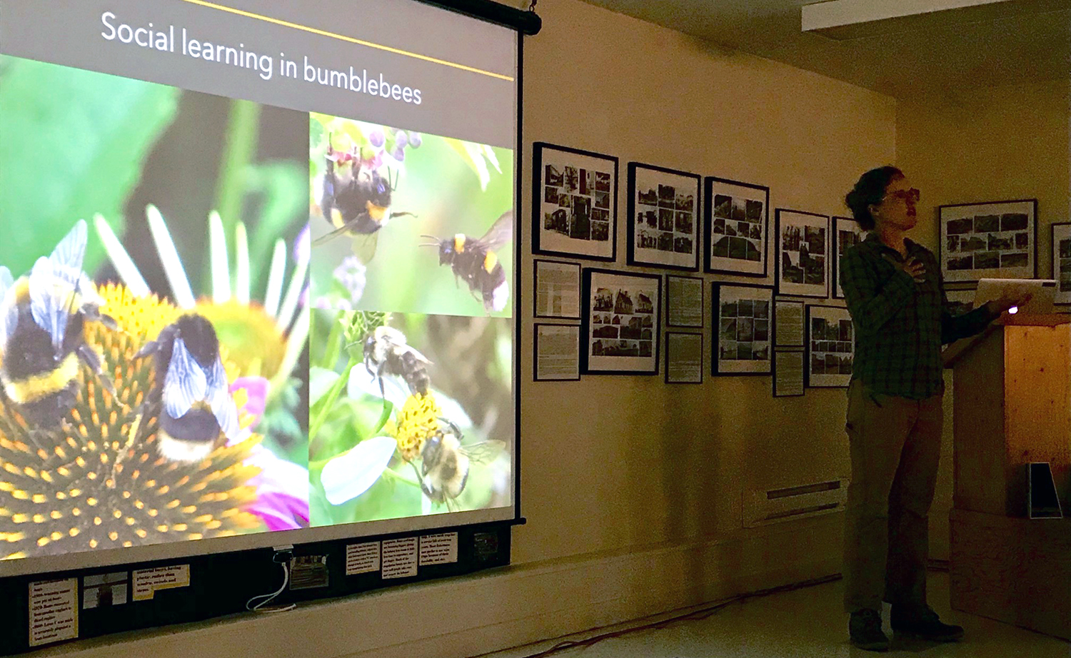 Dr. Patty Jones, Bowdoin College, lectures on Bumblebee Research in 2019.