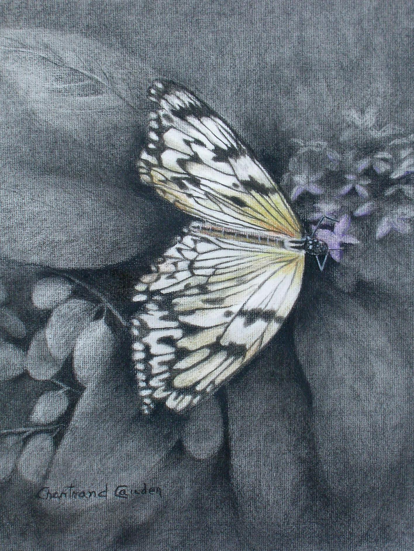 "Papillon Fusain 16"" x 13"""