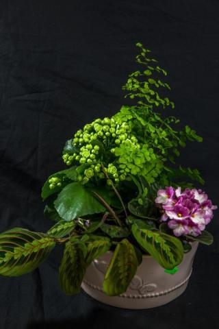 https://0901.nccdn.net/4_2/000/000/01e/20c/lcp-butterfly-planter-apr28-2020-4566.jpg