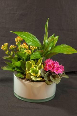 https://0901.nccdn.net/4_2/000/000/01e/20c/lcp-planter-basket-may12-2020-4745.jpg