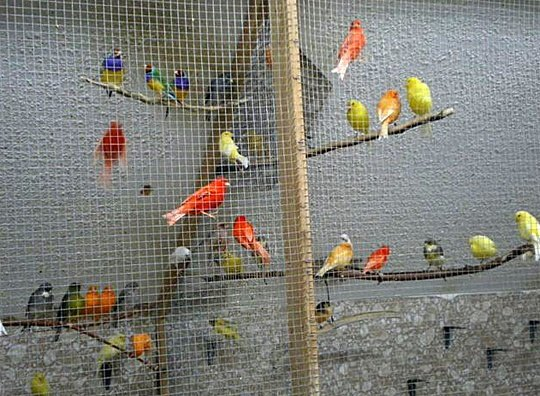 VICTOR'S BIRDS