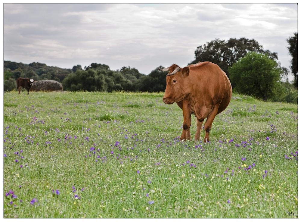 Filitosa, Corse - Beuh!  Qu'est-ce que peut  bien faire un  photographe dans  mon champ avec  mes menhirs? - Avril  2010