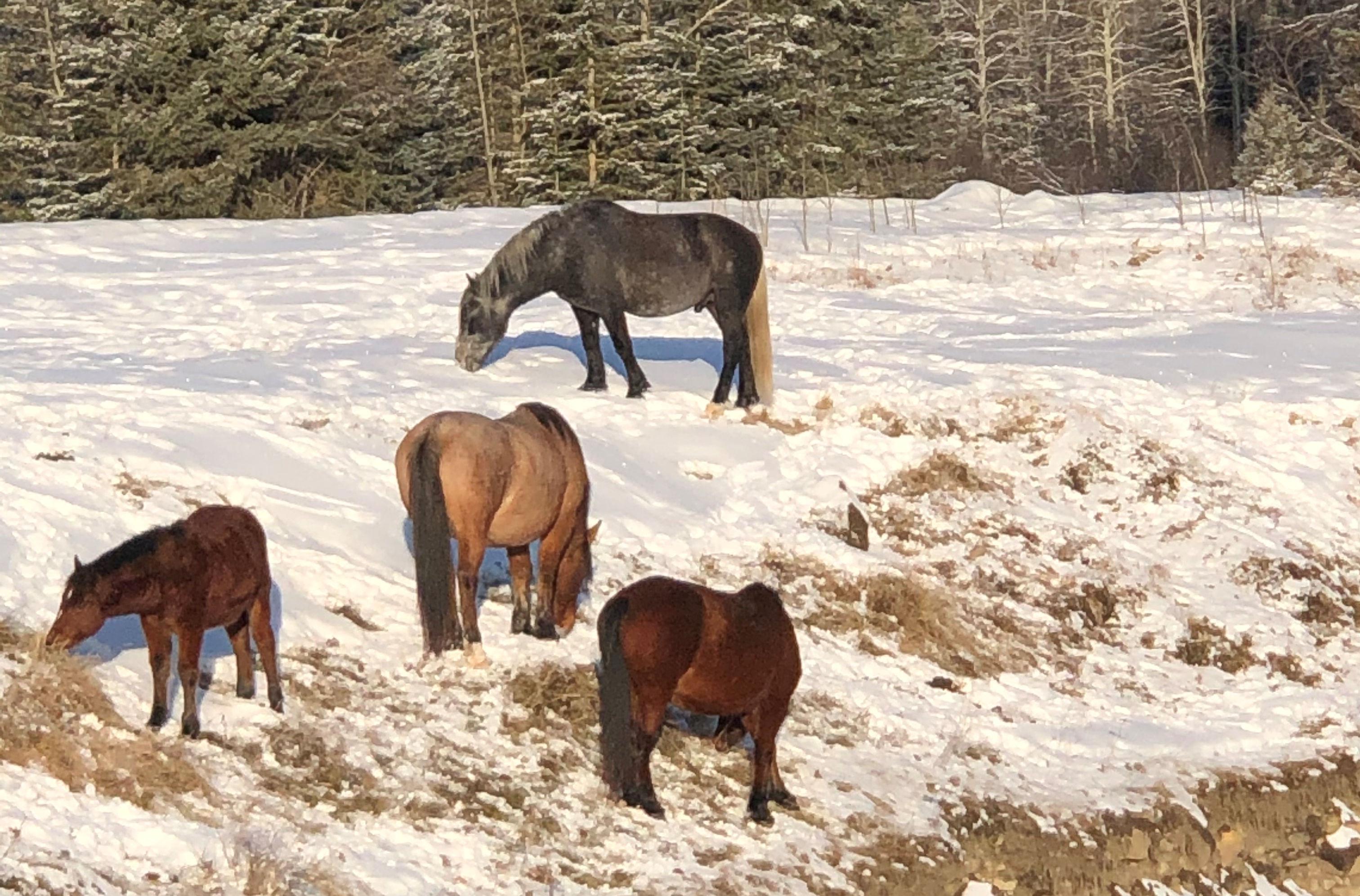 https://0901.nccdn.net/4_2/000/000/023/130/Wild-Horses2-3024x1993.jpg