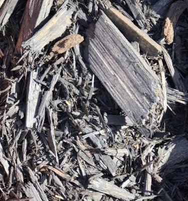 Paillis de cèdre noir