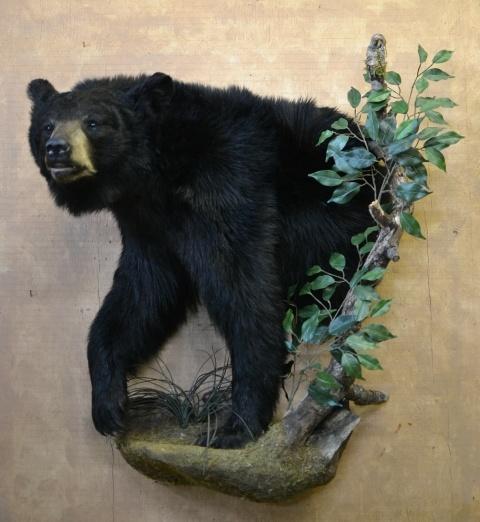 https://0901.nccdn.net/4_2/000/000/038/2d3/Animals-Clar-Pic-2017-4--2--480x522.jpg