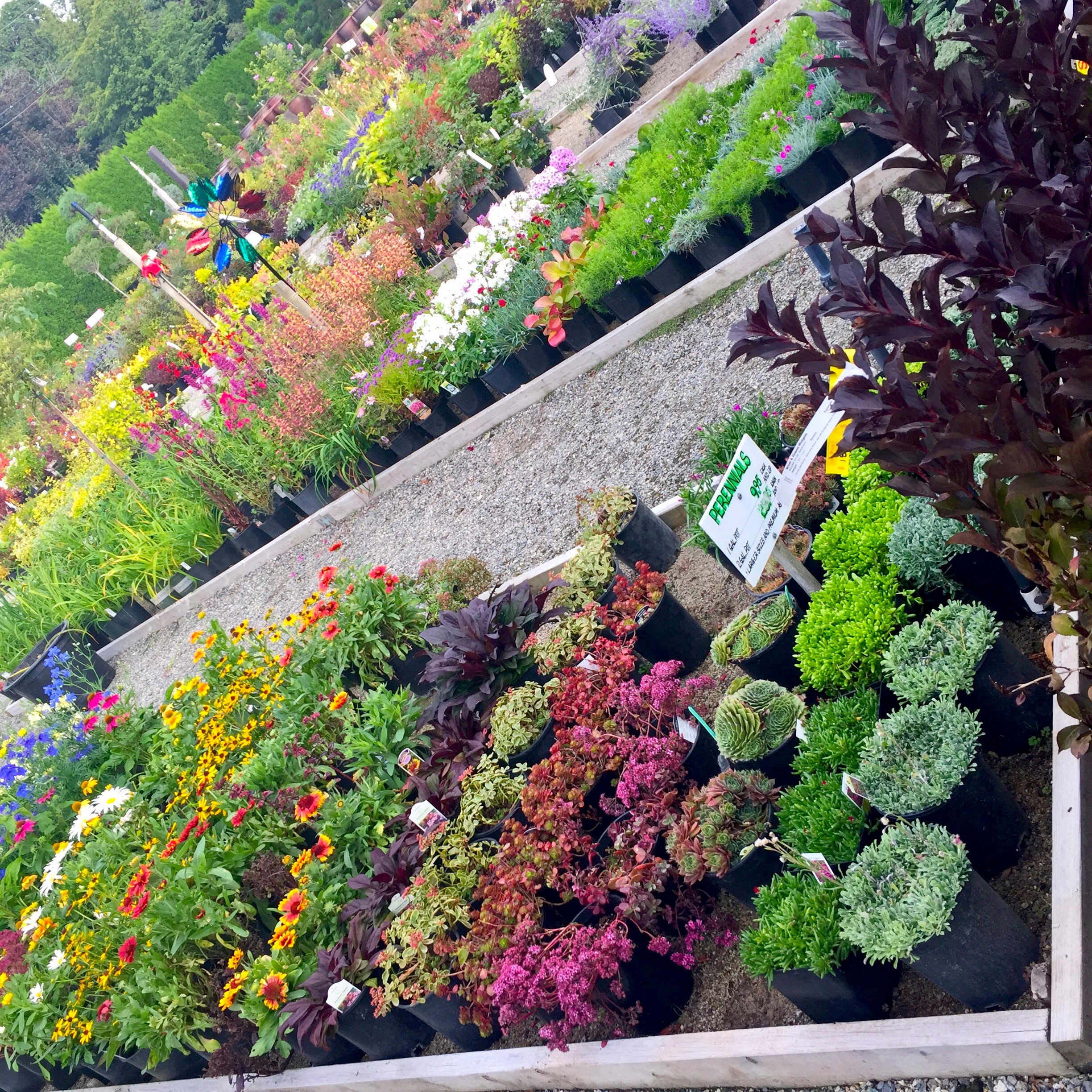 Large selection of perennials available