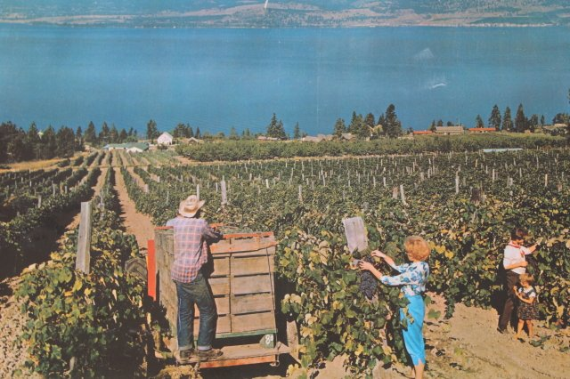 https://0901.nccdn.net/4_2/000/000/038/2d3/Oak-Bay-Vineyard-1965-.JPG
