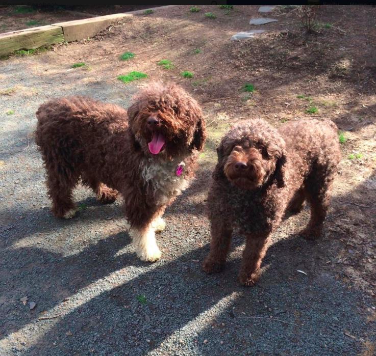 Mia and Bonny