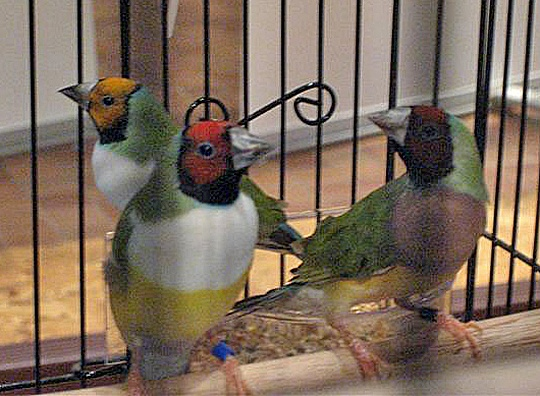DAVE'S BIRDS