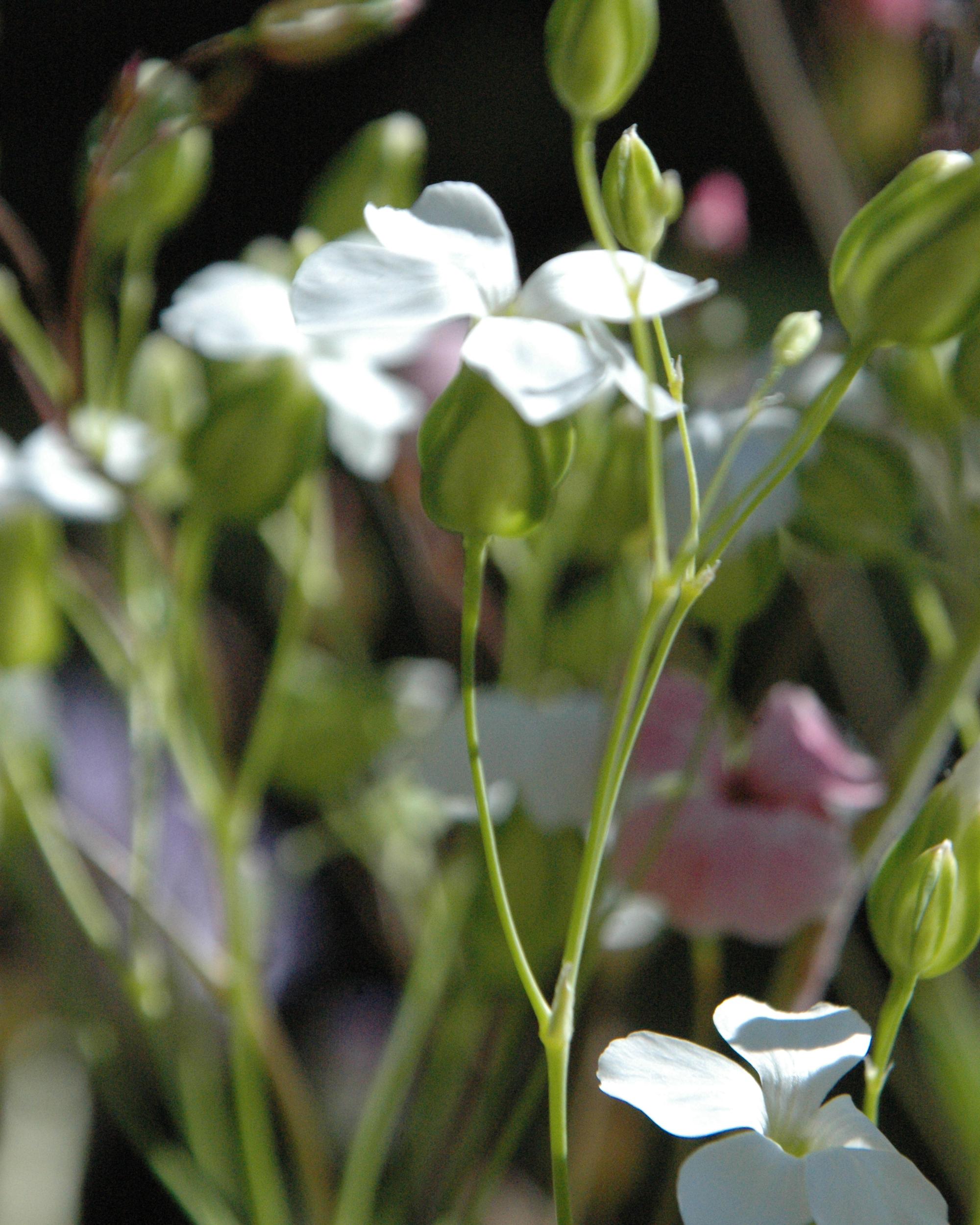 https://0901.nccdn.net/4_2/000/000/038/2d3/flowers05.jpg
