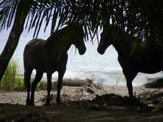 https://0901.nccdn.net/4_2/000/000/038/2d3/horses-320x240.jpg