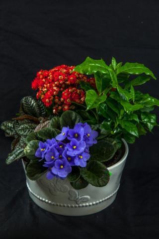 https://0901.nccdn.net/4_2/000/000/038/2d3/lcp-butterfly-planter-apr28-2020-4564.jpg