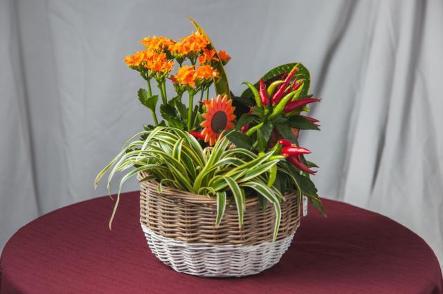 https://0901.nccdn.net/4_2/000/000/038/2d3/lcp-planters-sept17-2020-2843.jpg