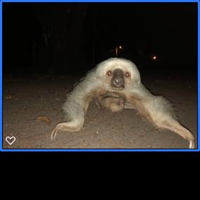 https://0901.nccdn.net/4_2/000/000/038/2d3/sloth-284x284.png