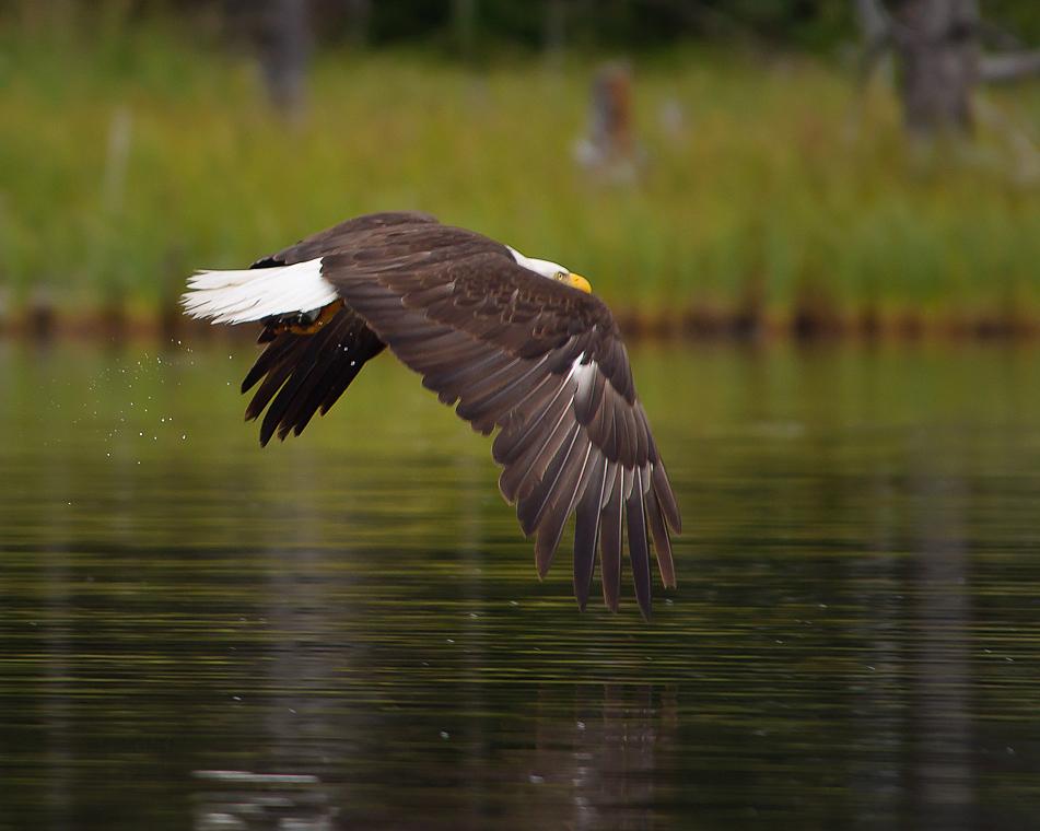 https://0901.nccdn.net/4_2/000/000/038/2d3/wildlife_04.jpg
