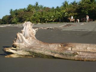 https://0901.nccdn.net/4_2/000/000/03f/ac7/Costa_Rica-_Matepalo-_2009_146-320x240.jpg