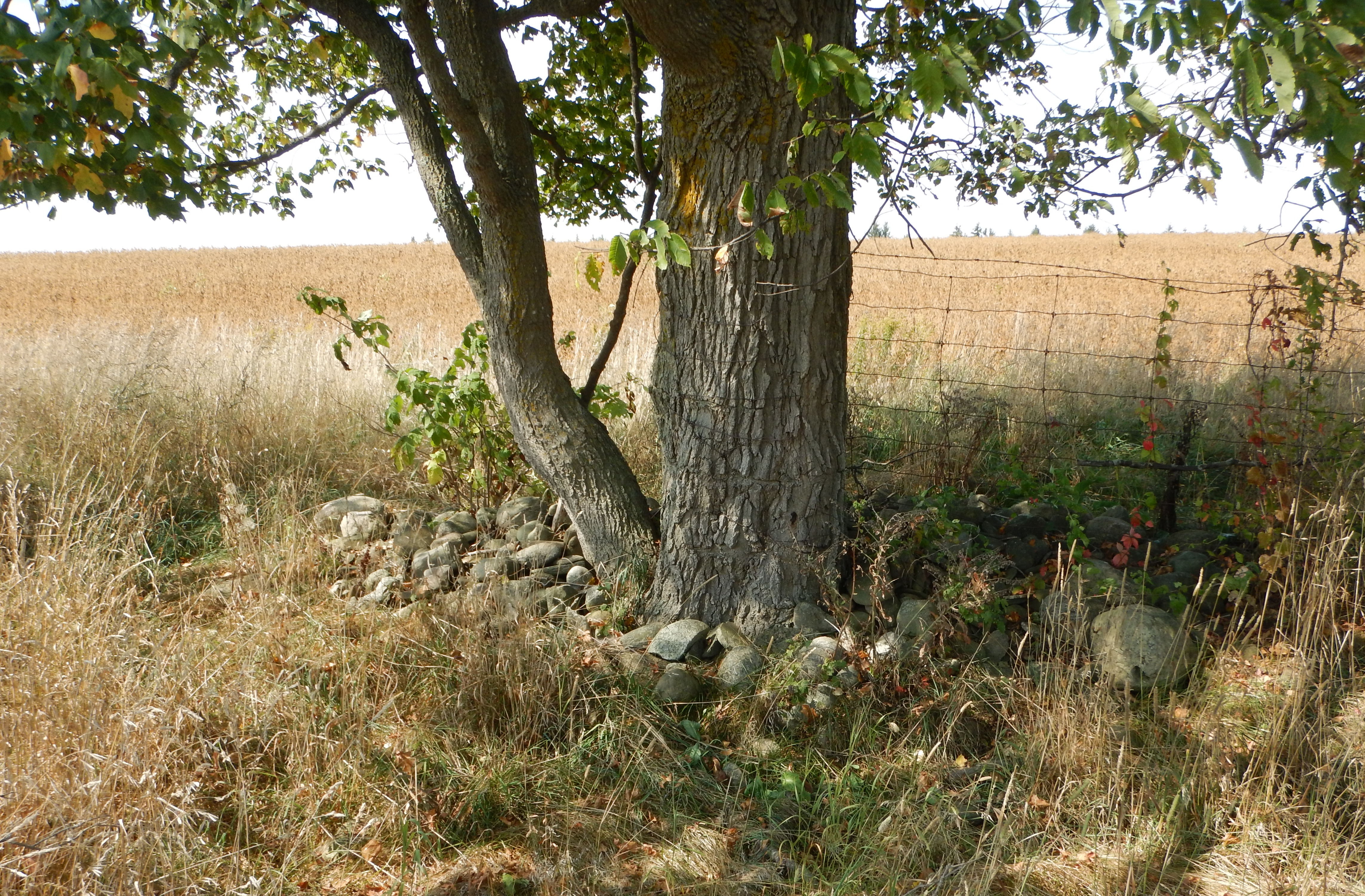 Fence/tree row with stone pile.