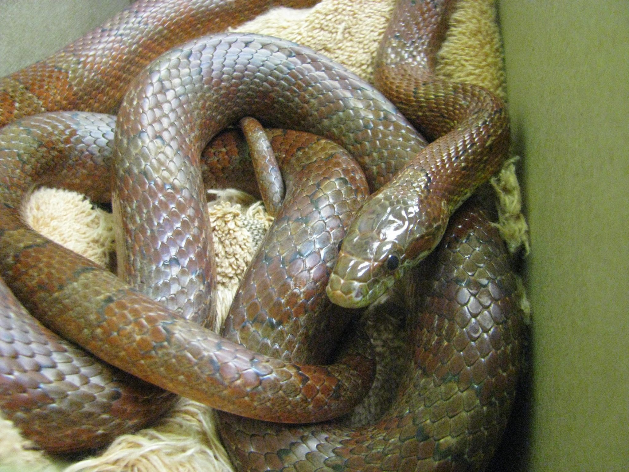 Calgary Avian & Exotic Pet Clinic - Snake Care