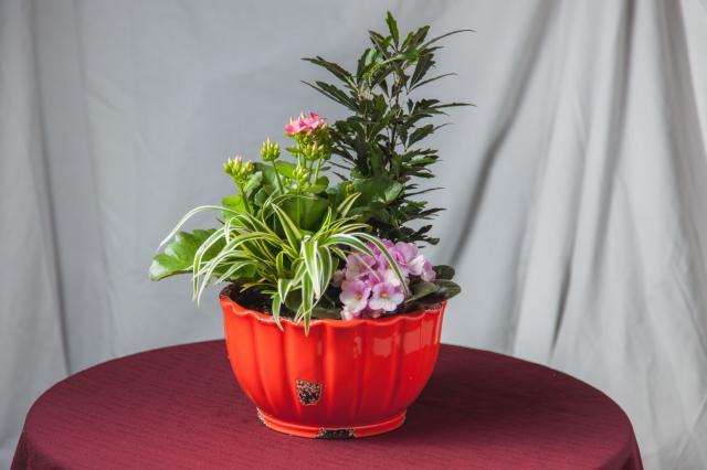 https://0901.nccdn.net/4_2/000/000/03f/ac7/lcp-planters-sept17-2020-2828.jpg