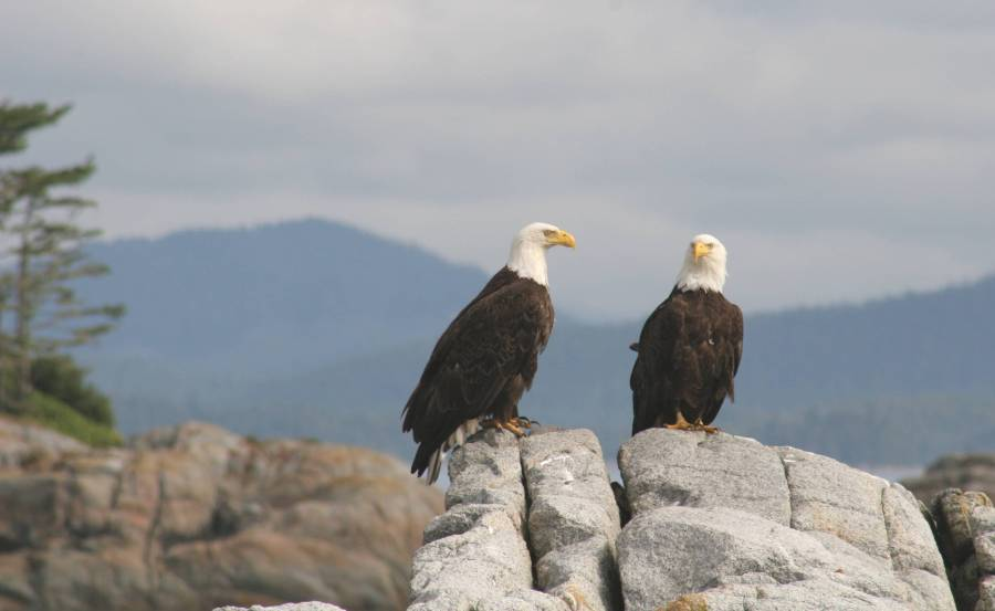 https://0901.nccdn.net/4_2/000/000/046/6ea/eagles-on-rocks--Lund-BC.jpg