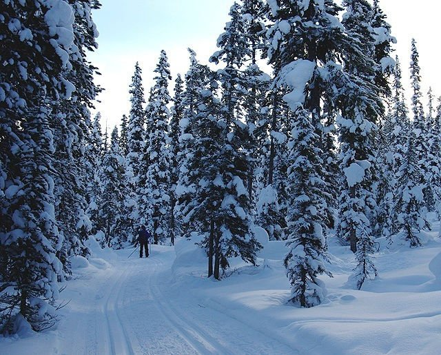 https://0901.nccdn.net/4_2/000/000/046/6ea/x-country-skiing-640x515.jpg