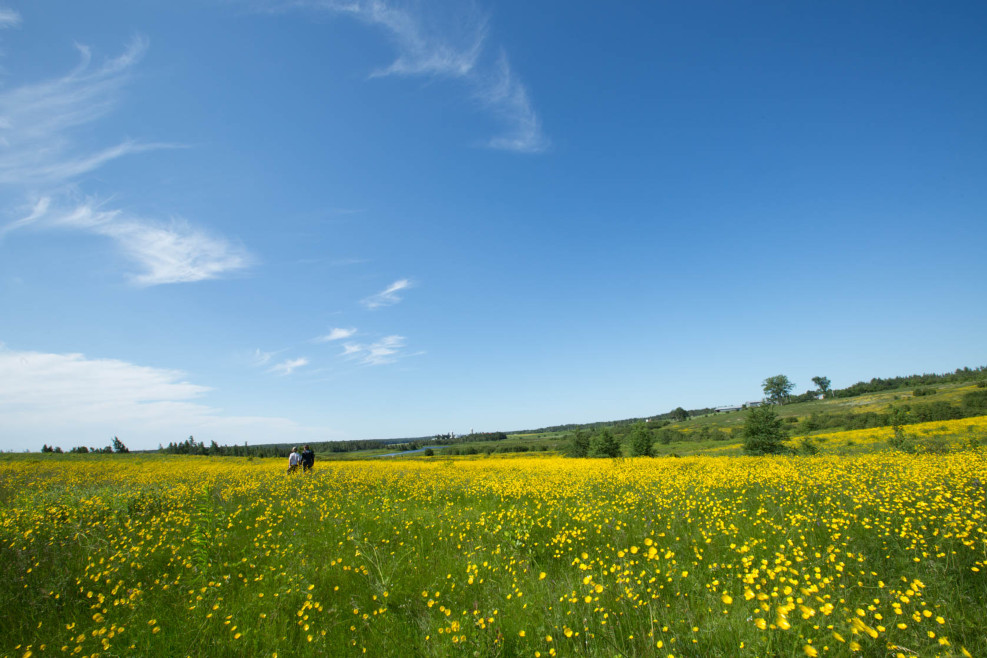 A bounty of Buttercups on Lot 14-22