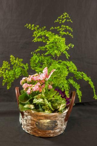 https://0901.nccdn.net/4_2/000/000/048/0a6/lcp-planter-basket-may12-2020-4749.jpg