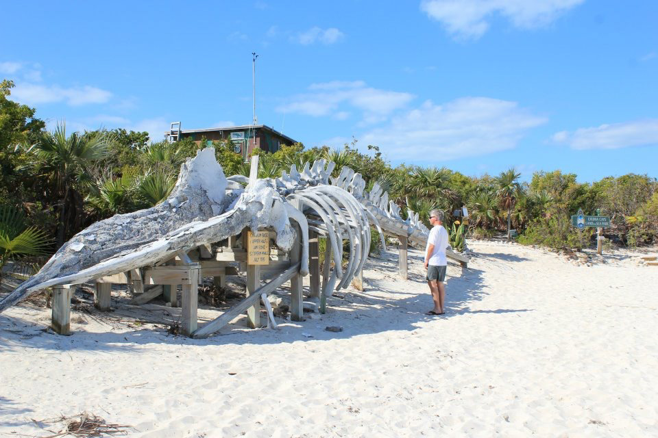 HUMPBACK WHALE SKELETON AT WARDRICK WELLS RENDEZVOUS PARK EXUMAS