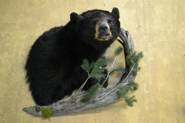 https://0901.nccdn.net/4_2/000/000/04b/787/Animal-2014-Wildlife-O-5--3--640x427.jpg