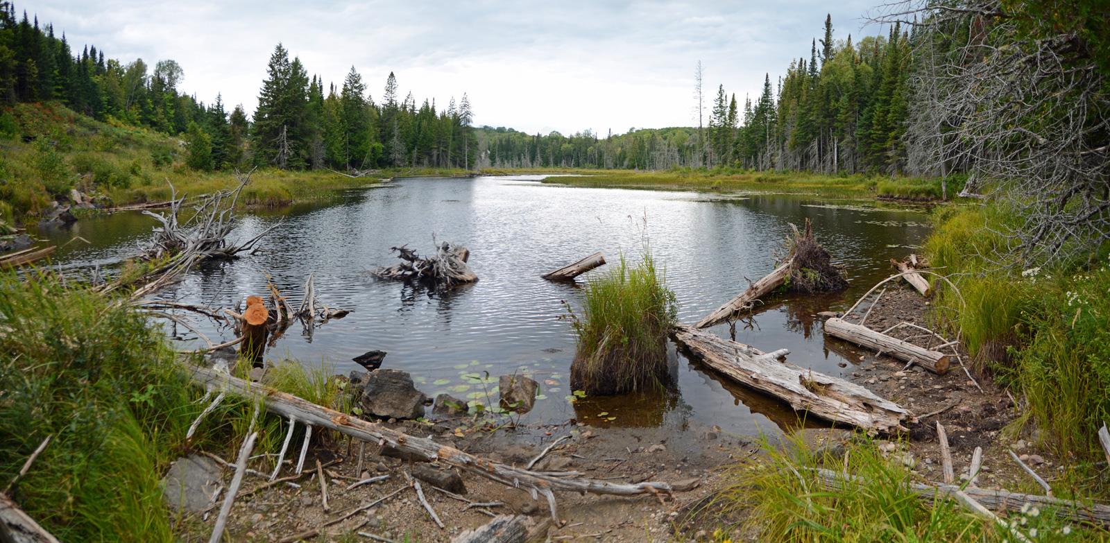 https://0901.nccdn.net/4_2/000/000/04b/787/dead-wood-lake.jpg