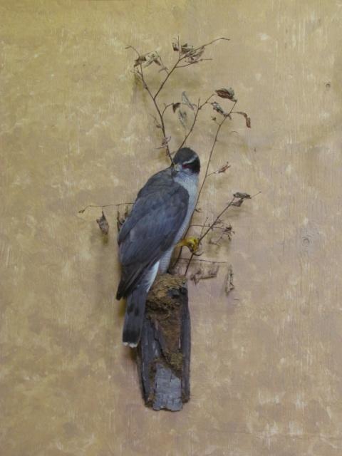 https://0901.nccdn.net/4_2/000/000/04b/f00/Bird-blueish-2-2011-11--3--480x640.jpg