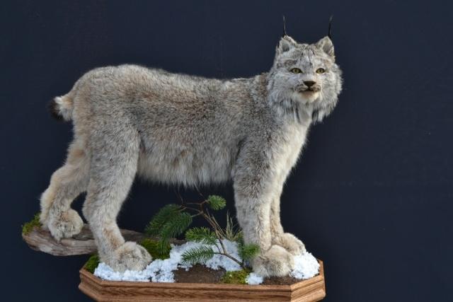 https://0901.nccdn.net/4_2/000/000/04c/a91/Animal-2014-Wildlife-O-2--3--640x427.jpg