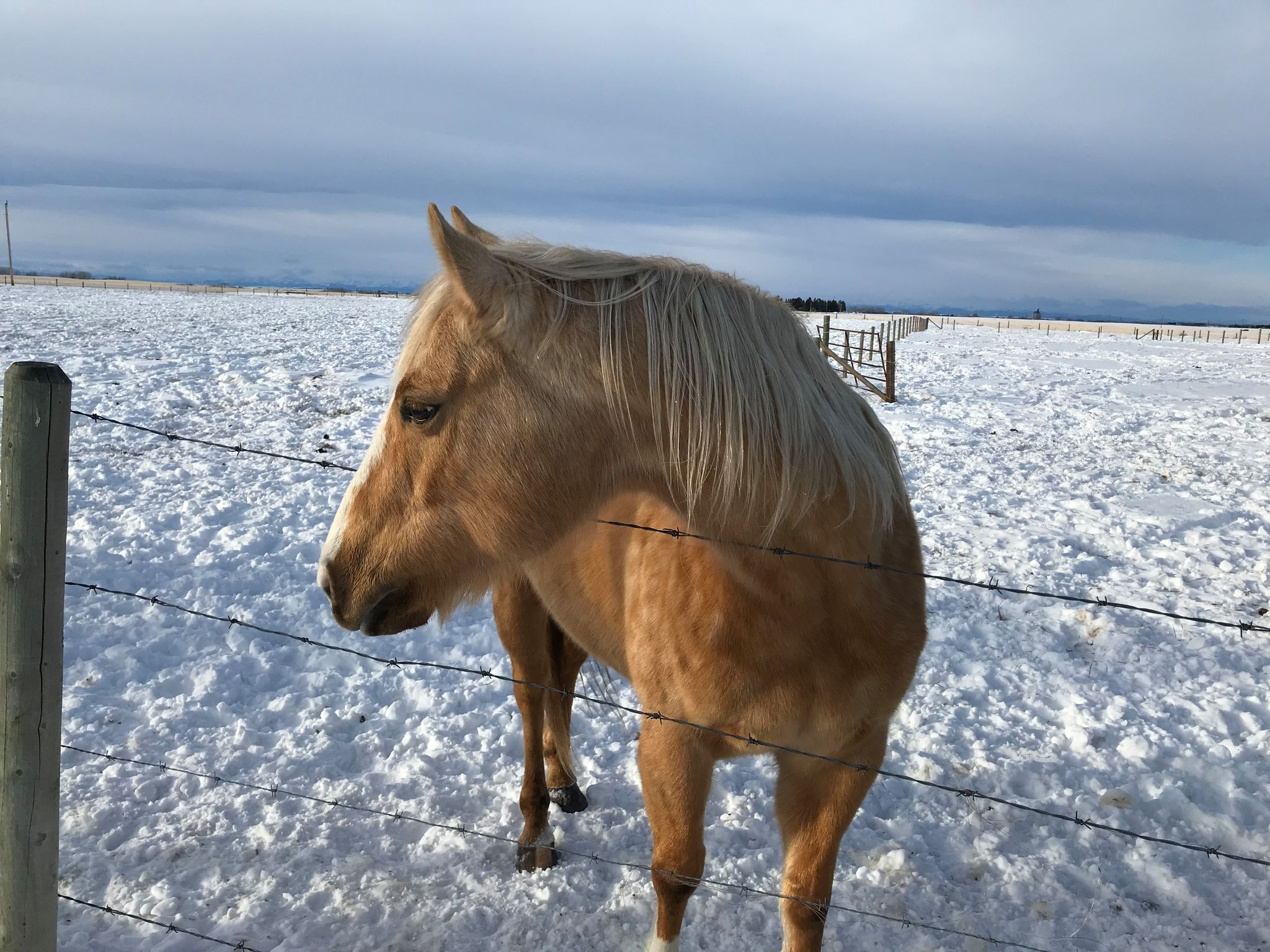 ANGEL - Jan 22/21. We lost Angel due to complications from colic.